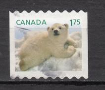 Canada, Ours Polaire, Polar Bear - Faune Arctique