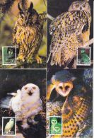 BIRDS, OWLS, CM, MAXICARD, CARTES MAXIMUM, 4X, 1995, CHINA - Eulenvögel