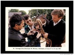 37 - TOURS - Tatouage D'un Cheval - Vétérinaire - 1987 - Tours