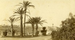 Monaco Palmiers Ancienne Photo CDV Davanne & Aleo 1870 - Oud (voor 1900)