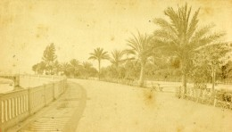 France Nice Quai Massena Palmiers Ancienne Photo CDV 1870 - Old (before 1900)