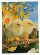 PAQUES-- Poussins , Fleurs   ,  Abeille - Pâques