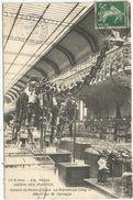 PARIS - Jardin Des Plantes - Galerie De Paléontologie . Le Diplodocus (long. 27 M.) Offert Par M. Carnegie - Parcs, Jardins