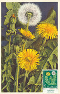 D31419 CARTE MAXIMUM CARD TRIPLE FD 1960 SWITZERLAND - TARAXACUM LEONTODON CP ORIGINAL - Maximum Cards