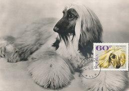 D31438 CARTE MAXIMUM CARD 1969 POLAND - DOG AFGHAN HOUND CP ORIGINAL - Dogs