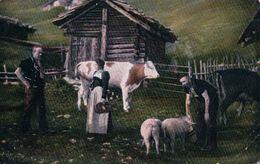 Scène De La Campagne, Armaillis Et Bétail, Vaches Et Cochons (20.7.16) - Elevage