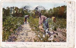 Picking Cotton ... (98736) - Autres