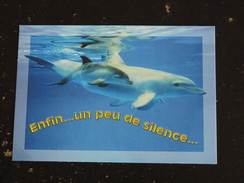 DAUPHIN DOLPHIN - ENFIN UN PEU DE SILENCE - Dauphins