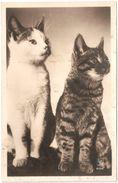 Kat / Cat / Chat / Katze - Carte Photo / Fotokaart Editions Superluxe Paris - Chats