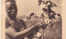 Afrique Equatoriale Française  / LA CUEILLETTE DU COTON - Central African Republic