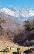 NEPAL - COLOUR PICTURE POST CARD - PEAKS OF HIMALAYA - NU TSE, MT. EVEREST, LHO TSE - TRAVEL / TOURISM / MOUNTAINEERING - Nepal