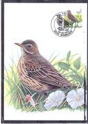 CM Belgique - Oiseau - Buzin - Pipit Farlouse - Passereaux