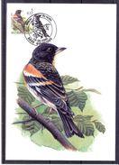 CM Belgique - Oiseau - Buzin - Pinson Du Nord - Passereaux
