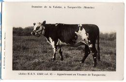 """TOCQUEVILLE - Carte Photo Vache """"JOLIE"""" HBN 43461 Du Vicomte De TOCQUEVILLE - Frankreich"""