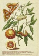 21E : Orange Fruit Tree, Moth And Caterpillar - Flowers, Plants & Trees