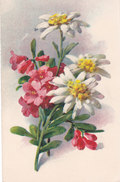 CARD BOUQUET RODODENDRO E STELLE ALPINE (NON FIRMATA) -FP-N-2---0882-27543 - Klein, Catharina