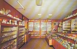 Sanibel Island Florida, Elsie Malone Specimen Shells Store(?) Interior View, C1960s Vintage Postcard - Fort Myers