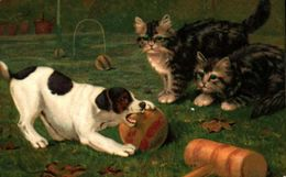 Chien Illustré 157 - Jeu Cricket Chats Yeux Strass Gaufré Embossed - Dogs