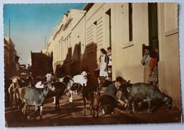 Islas Canarias - Las Palmas De Gran Canaria - Escena Popular - Animée - Chèvres - Colorisée - CPSM GF - (n°8778) - Gran Canaria