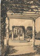 FEDALA (Maroc) Pergola Du Jardin TRAOUBLI - Otros
