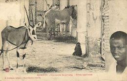 CPA Djibouti Afrique - Une écurie De Pur-sang (87085) - Djibouti