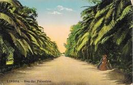 Lisboa (Lisbonne) - Rua Das Palmeiras No Jardim Botanico - Lisboa