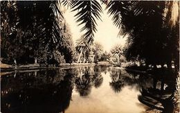 Hawaii Postcard Palms From The Boat A958) - Postcards