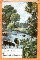 ALB367, Vaches Dans La Rivière, A. Zwierzina, Précurseur, Circulée 1904 - Koeien
