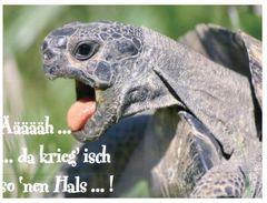 (435) Tortoise - Tortue - Tartarughe