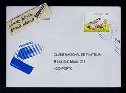 """""""FALCON Peregrine"""" Portugal Iberian Spécimen Conservation Oiseaux Birds Rapaces Gc2873 - Aigles & Rapaces Diurnes"""