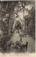 CAMBODGE - - INDOCHINE -  KOMPONG CHAM - Route De Vat-Nokor - Charettes à Boeufs - Cambodge