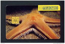 CZECH REPUBLIC - Chip Phonecard Starfish  Used - Tschechische Rep.