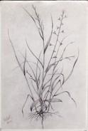 AK Foto Pflanzenzeichnung - Gellert - 1943  (30282) - Blumen