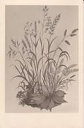 AK Pflanzenzeichnung - Ca. 1940  (30284) - Blumen