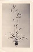 AK Pflanzenzeichnung - Ca. 1940  (30285) - Blumen
