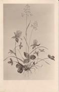 AK Pflanzenzeichnung - Ca. 1940  (30286) - Blumen