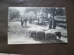 CPA 48 Lozère Florac Concours Race Ovine Des Causses Moutons Agriculture TBE - Florac