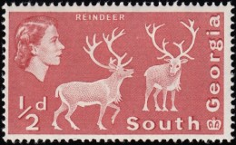 SOUTH GEORGIA - Scott #1 Reindeer / Mint NH Stamp - Great Britain (former Colonies & Protectorates)