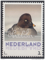 Nederland - 24 Januari 2017 - Wintervogels - Brilduiker - Vogels/birds/vögel/oiseaux - MNH - Patos