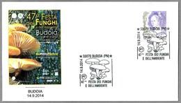 47 FIESTA DEL HONGO - 47 FESTA DEI FUNGHI. Setas - Mushrooms. Budoia, Pordenone, 2014 - Champignons