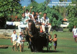 2 AK Tonga * Foa Island - Das Sandy Beach Resort - Eine Der Hauptinseln Der Inselgruppe Haʻapai * - Tonga