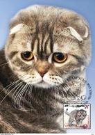 Belarus 2017 Set 4 Maxi Cards  Kittens Chatons Kätzchen Cat Cats Chat Chats - Chats Domestiques