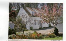 Postcard - Guernsey Cottage Forest Photo Taken By Erik Ferbrache A.R.P.S. Very Good - Postcards