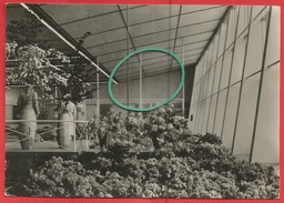 Erfurt, Internationale Gartenbauausstellung Der Sozialistischen Staaten , Halle XIII, Blumen Und Zierpflanzenbau - Erfurt