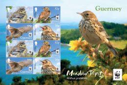 W.W.F. WWF Guernsey MNH Perf Sheetlet 2017 : Birds / Bird / Meadow Pipit - W.W.F.