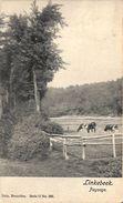 Linkebeek - Paysage (vaches, 1902) - Linkebeek