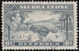 SIERRA LEONE - Scott #180 Rice Harvesting (*) / Used Stamp - Sierra Leone (...-1960)