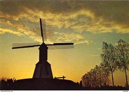LONDERZEEL (Vlaams-Brabant) - Molen/moulin - Historische Opname Van Het Merelaantje Kort Na De Opbouw. (Thans In Verval) - Londerzeel