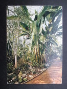 CP BELGIQUE BELGIE (V1709) MEISE (2 Vues) Jardin Botanique National De Belgique Palais Des Plantes - Afrique Subtropical - Meise