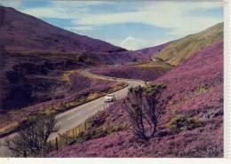 SCOTLAND - Inverness-shire, The Slochd Pass,  Purple Heather - Inverness-shire